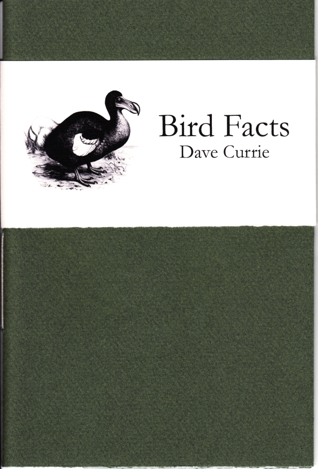 Currie - Bird Facts_0001 copy
